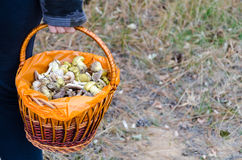 Mushrooms in a wicker basket. In the woods stock photos