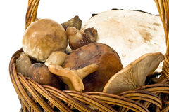 Mushrooms in the wicker woven basket Royalty Free Stock Photography