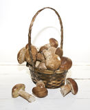 Mushrooms. Wild mushrooms, freshly collected in the forest Stock Images