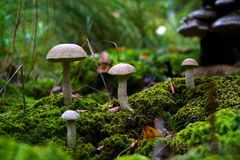 Mushrooms. Stock Image