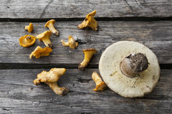 Mushrooms. Wild mushrooms on a wood table Royalty Free Stock Image