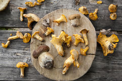 Mushrooms. Wild mushrooms on a wood table Stock Images