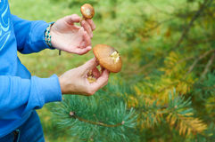 Mushrooms in ауьфду рфтвы Stock Images