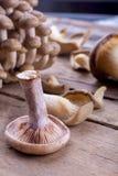 Mushrooms on wood mix Stock Photos
