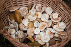 Mushrooms in wooden basket Stock Photo