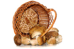 Mushrooms in a wooden basket  on white Stock Photography