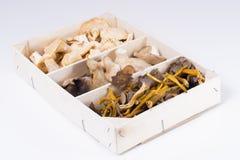 Mushrooms. Royalty Free Stock Images
