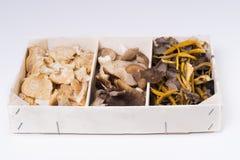 Mushrooms. Stock Photo
