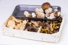 Mushrooms. Stock Photography