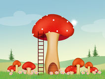 Mushrooms in the woods Royalty Free Stock Images