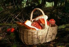 mushroomtime Obrazy Royalty Free