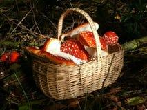 mushroomtime Fotografia Stock