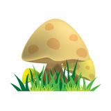 Mushroon Royalty Free Stock Image