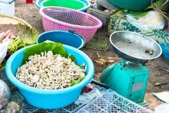 Mushroos Μαΐου στη λεκάνη για την πώληση Στοκ Φωτογραφίες