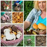 Mushrroms collage - food ingredients Royalty Free Stock Photography