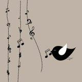 Music bird Stock Image