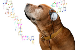 Music dog. Old dog loving his music isolated notes stock photography