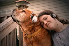 Music dog. Dog and girl loving their music Royalty Free Stock Image