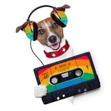 Music dog Royalty Free Stock Photography