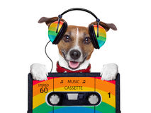 Music dog Stock Photo