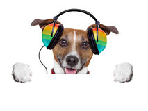 Music dog Stock Image