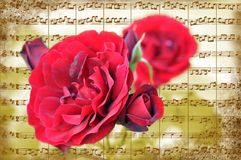 Music flowers Stock Photography