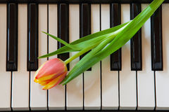 Music and flowers Royalty Free Stock Photography