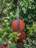 Music in the garden. Beautiful double-bass sits among flowers in a musician's garden Royalty Free Stock Photography