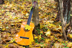 Music guitar in autumn leaves forest background Stock Image