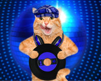 Music headphone vinyl record cat. Dj Royalty Free Stock Photos