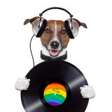 Music headphone vinyl record dog. Holding Stock Photos