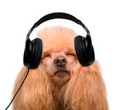 Music headphone vinyl record dog Stock Photography