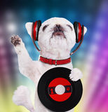 Music headphone vinyl record dog. Royalty Free Stock Images
