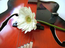 Music and love. A gerbera on a guitar Royalty Free Stock Image