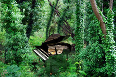 Music and nature. A piano in the middle of a bushy green forest Stock Image