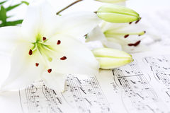 Music notes. With white lily flower royalty free stock photography