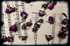 Music notes with the dry rosebuds Stock Photo