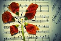Music notes with the fallen petal Royalty Free Stock Image