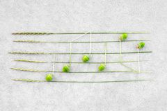 Music notes made of green acorns and wild grass royalty free stock photography