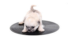Music record puppy. Shot of a music record puppy on white Stock Photos