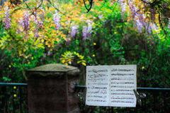 Music score of the spring. Under the tree,an oldman had played an instrument in a performance stock photography