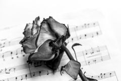Music sheet and dead rose. The idea of the concept for love of music for musical inspiration