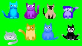 Musical cats on green screen Stock Photography