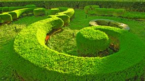 Musical green garden- crop circle Stock Photos