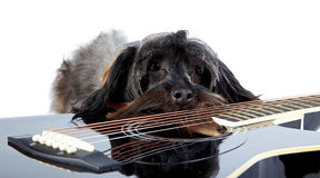 Sad doggie and guitar. Royalty Free Stock Image