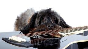 Sad doggie and guitar. Royalty Free Stock Image