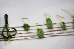 Musical note from green leaves, white background. Green vegetarian concept. Musical note symbol and treble clef on the stave made from green leaves of sorrel and Stock Photos