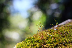 Musical note like little grass. An interesting scene Stock Photography
