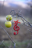 Musical notes  in apple orchard Stock Images