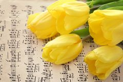 Musical notes and tulip Royalty Free Stock Images